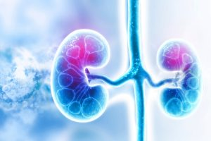Terapia nutricional para pacientes renais